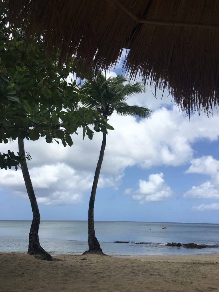 palm trees on the private beach at eastwinds resort saint lucia