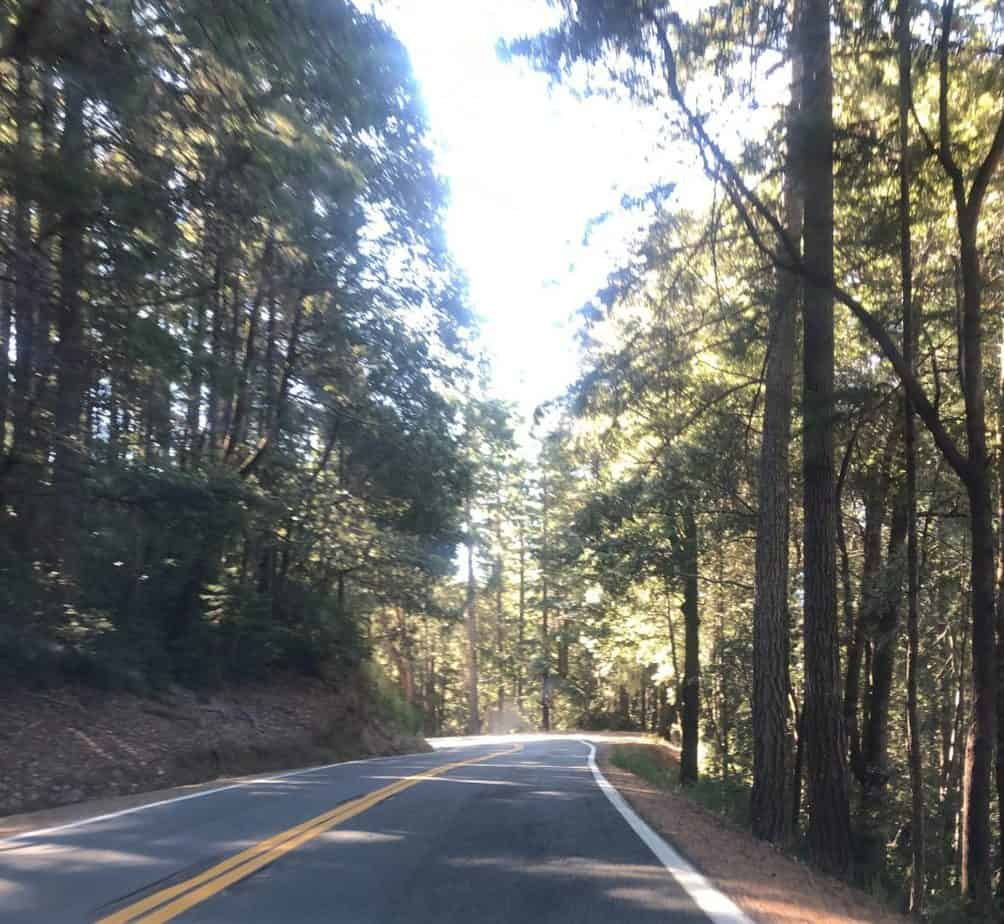 Driving through giant redwoods