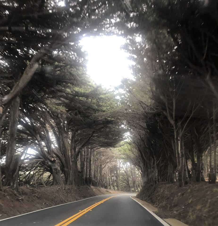 Road to Fort Bragg CA